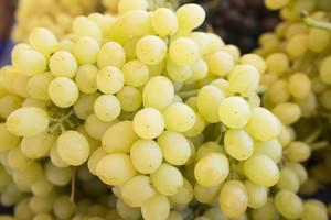 Сортовые характеристики винограда Лора