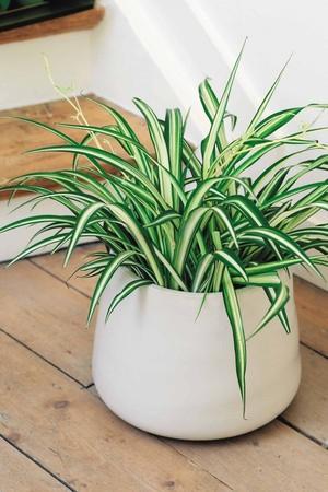 Как вырастить комнатные растения