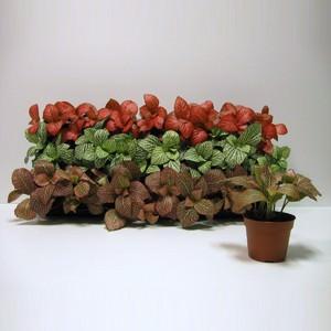 Состав набора и сроки цветения