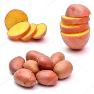 Ботаническое строение картофеля - клубень, куст, развитие