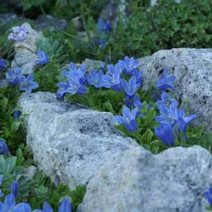 Голубенькие цветочки, название
