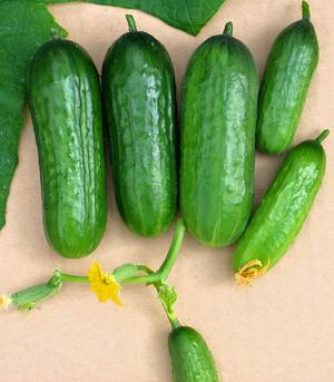 Подробное описание всех видов овощей