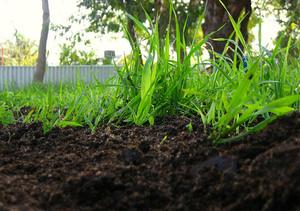 Общие сведения о почве