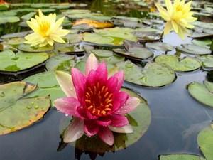 Название болотный растений