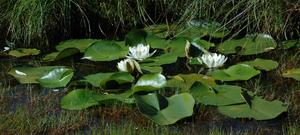 Какие растения растут на болотах