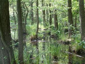 Растение растущие только на болотах