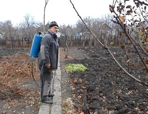 Применение в садоводстве железного купороса осенью