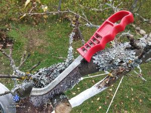 Применение в садоводстве железного купороса