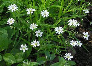 Характерные признаки и разновидности травянистых растений