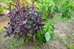 Украшение территории травянистыми растениями