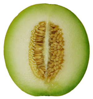 Дыня это ягода или фрукт, или овощ- что это такое, к чему относятся плоды растения, к какому семейству