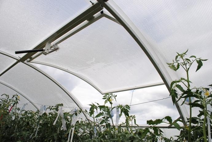 Для защиты от белокрылки выращиваемые в теплице или парнике томаты следует периодически подвергать проветриванию
