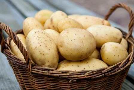 Если правильно подобрать сорт, ранний картофель можно получить уже в начале лета