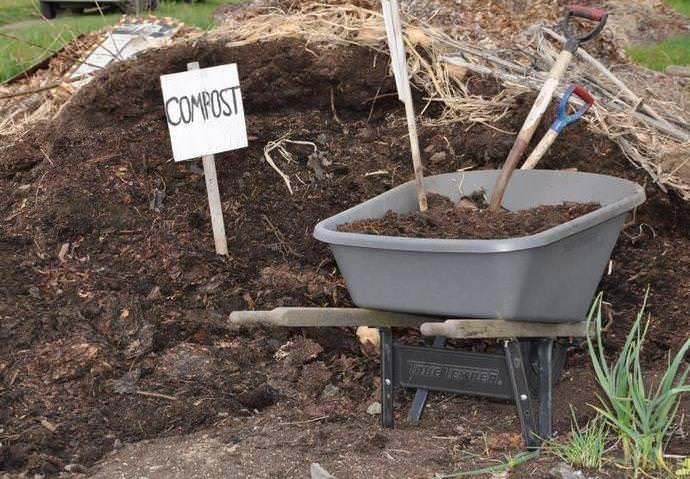 Положительное воздействие оказывает на чайно-гибридные розы органика в виде перегноя, компоста и навоза