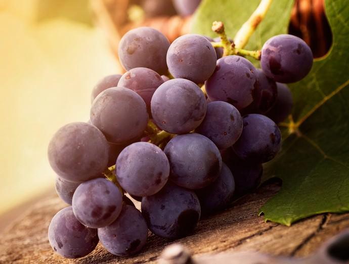 Полное созревание у суперранних сортов винограда наступает через 105-115 дней