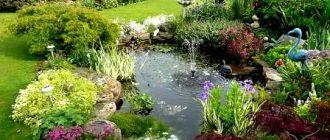 Какие растения лучше высаживать возле дома: полезные рекомендации