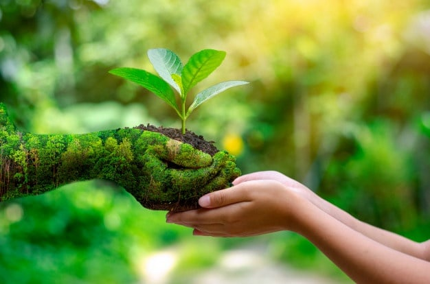 Наш зеленый мир