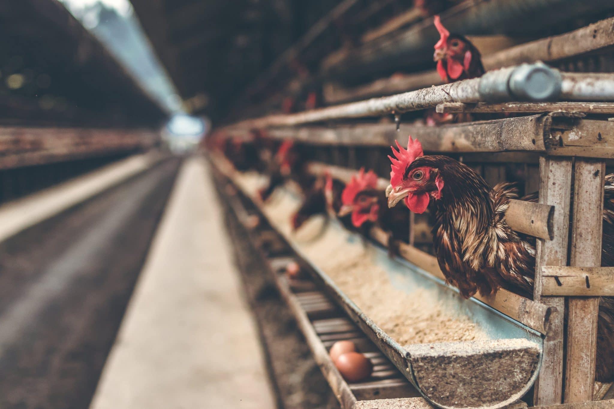 Кормовые добавки для животных: зачем нужны и как выбрать
