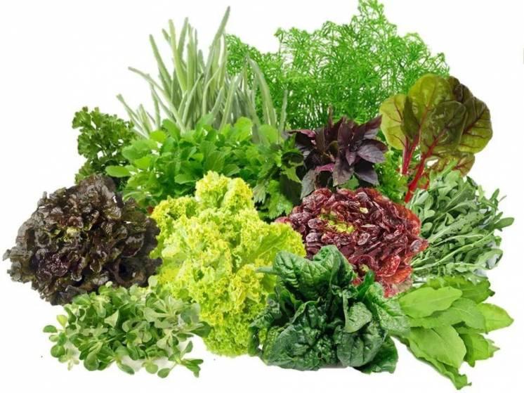 Когда лучше высаживать семена зелени?