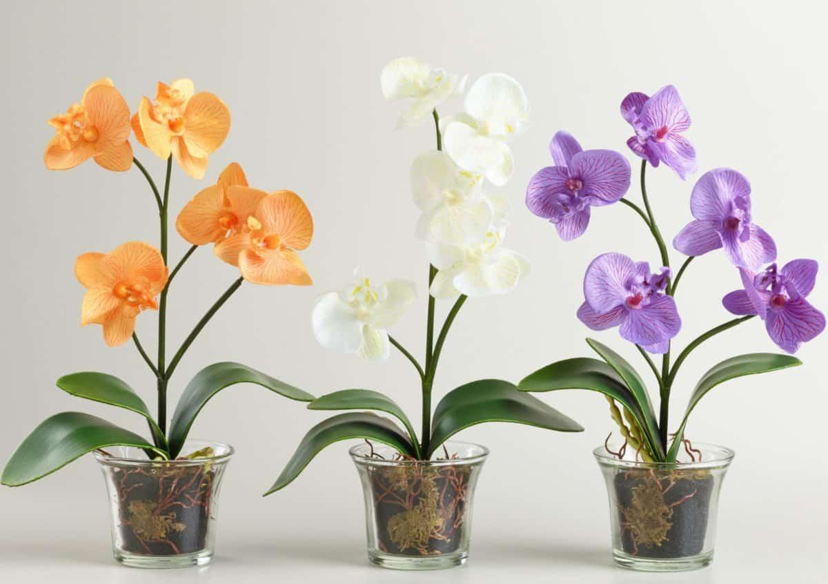Пересаживаем орхидеи: простые шаги для отличного результата