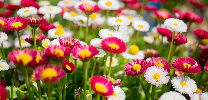 Как выбрать семена цветов для посадки